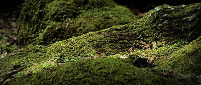 Photograph - Mossy Landscape by Nadalyn Larsen