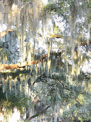 Photograph - Mossy Live Oak by Carol Groenen