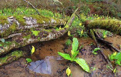 Photograph - Mossy Log Lagoon by Adria Trail