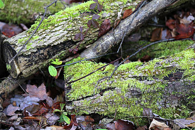 Photograph - Mossy Logs by Mary Bedy