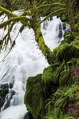 Photograph - Mossy Maple And Falls by Robert Potts