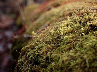 Photograph - Mossy by Michael Colgate