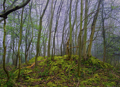 Photograph - Mossy Mound by Anne Kotan