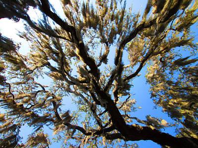 Photograph - Mossy Oak 1 by Elyza Rodriguez