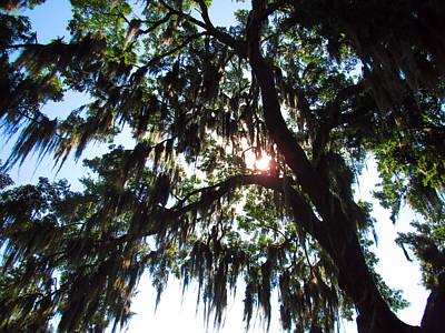 Photograph - Mossy Oak 2 by Elyza Rodriguez