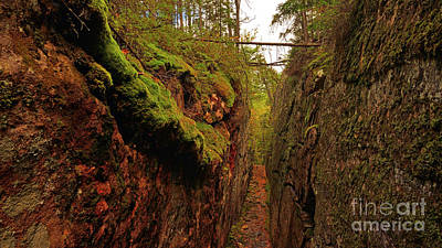 Photograph - Mossy Path by Joshua McCullough