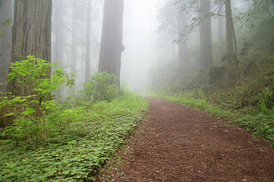 Photograph - Mossy Path by Kunal Mehra