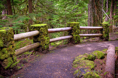Photograph - Mossy Path To River by Connie Cooper-Edwards