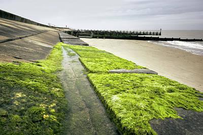 Photograph - Mossy Pier  by Svetlana Sewell