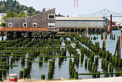 Photograph - Mossy Pilings by Tom Cochran