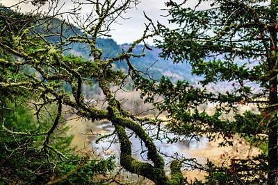 Photograph - Mossy Pond by Michael Scott