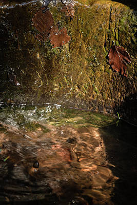 Photograph - Mossy Pool by Kathryn Bell