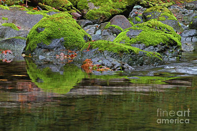 Landscape Photograph - Mossy Reflections by Gary Wing