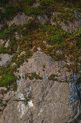 Photograph - Mossy Rock by Tikvah's Hope