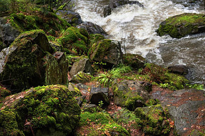 Photograph - Mossy Rocks And Water Stream by Jenny Rainbow