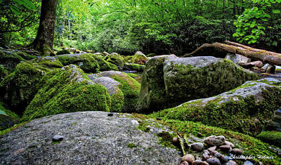 Photograph - Mossy Rocks by Christopher Holmes