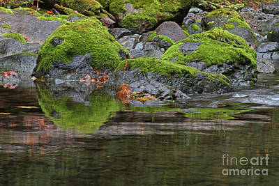 Photograph - Mossy Rocks by Gary Wing