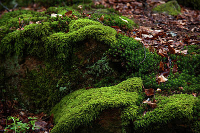 Photograph - Mossy Rocks In Spring Woods by Jenny Rainbow