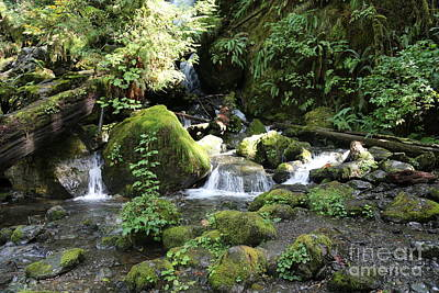Photograph - Mossy Rocks In The Rainforest by Carol Groenen