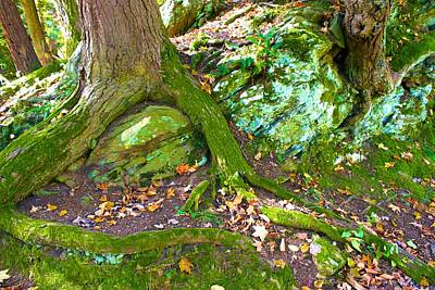 Photograph - Mossy Roots by Polly Castor