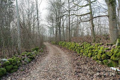 Photograph - Mossy Stone Walls Along A Country Road by Kennerth and Birgitta Kullman
