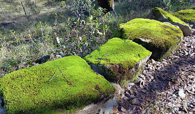 Painting - Mossy Stones by Barbara Oertli