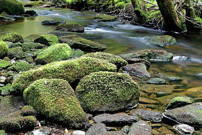 Photograph - Mossy Stream Bed by Nicholas Blackwell