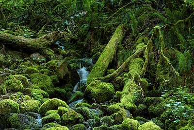 Photograph - Mossy Stream Bed by Robert Potts