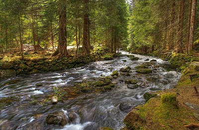 Photograph - Mossy Stream by Sean Allen