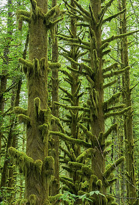 Photograph - Mossy Timber by Angie Vogel