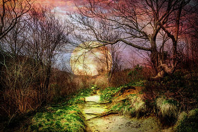 Photograph - Mossy Trail At Dusk by Debra and Dave Vanderlaan