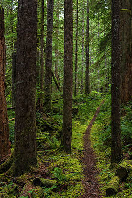 Photograph - North Souixon Creek Mossy Trail by Ken Aaron
