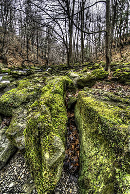 Photograph - Mossy Trail by Steven Wilson