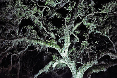 Photograph - Mossy Tree At Night by Kay Lovingood