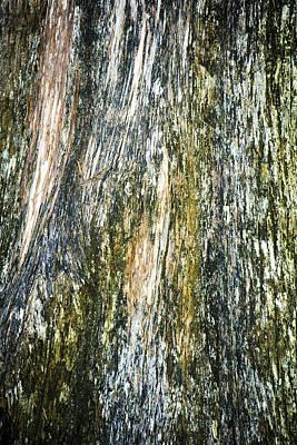 Photograph - Mossy Tree Bark by Marilyn Hunt