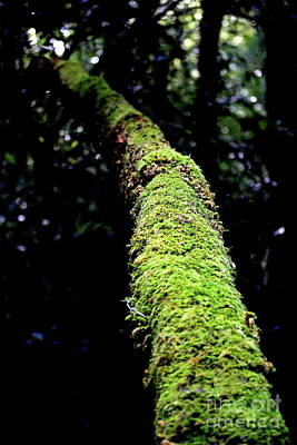 Photograph - Mossy Tree In The Wilderness. 7d5417 by Wingsdomain Art and Photography