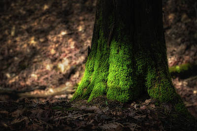Photograph - Mossy Tree by James Barber