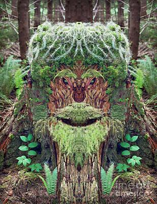 Mossman Tree Stump Art Print by Martin Konopacki