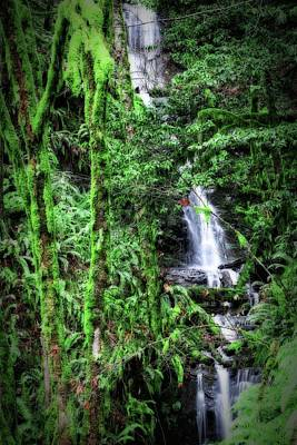 Photograph - Mossy Trees And Waterfalls  by Katie Wing Vigil
