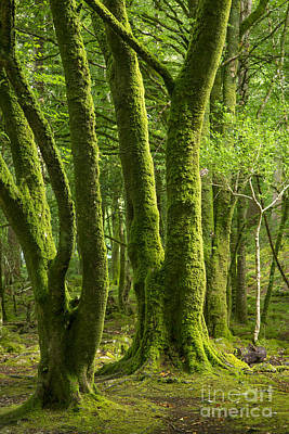 Photograph - Mossy Trees by Brian Jannsen