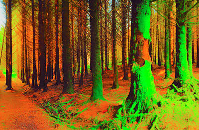 Photograph - Mossy Trees by Jan W Faul