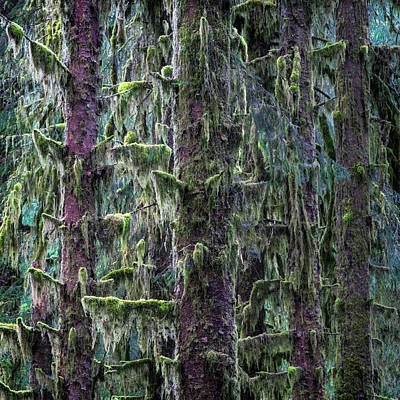 Cabin Wall Photograph - Mossy Trees by Stephen Stookey