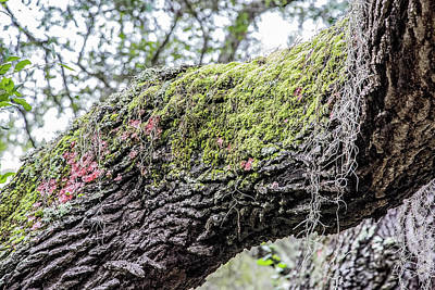 Photograph - Mossy Trunk by Richard Goldman