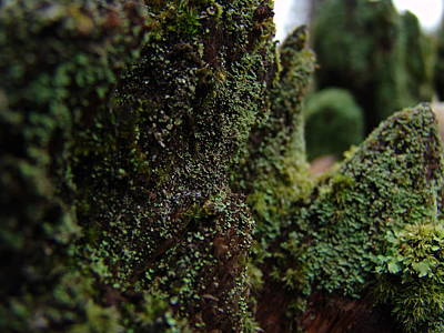Mossy Wood 008 Art Print by Ryan Vaal