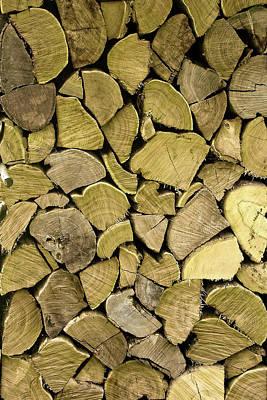 Susann Serfezi Photograph - Mossy Wood by AugenWerk Susann Serfezi