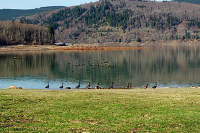 Photograph - Mossyrock Park by Tikvah's Hope