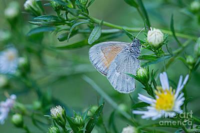 Photograph - Moth by Alana Ranney