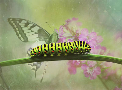 Photograph - Moth And Caterpillar In Spring by Georgiana Romanovna