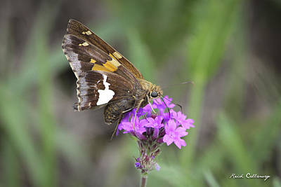 Photograph - Moth Balls by Reid Callaway
