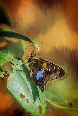Appalachian Mountains Painting - Moth Eaten Rhododendron by John Haldane